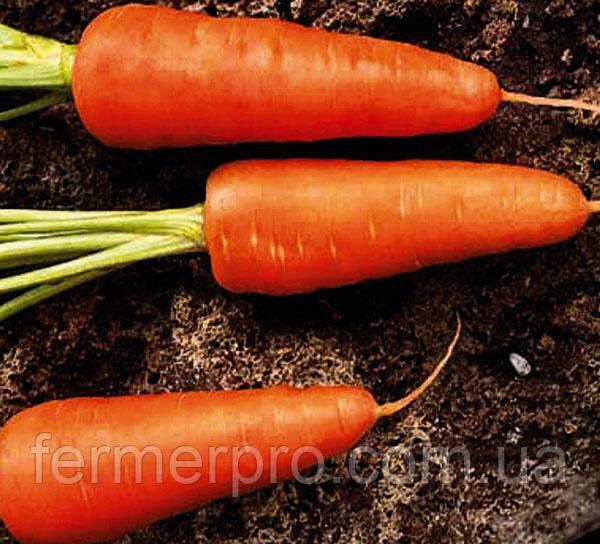 Семена моркови Шантане Редкор 0.5кг Griffaton