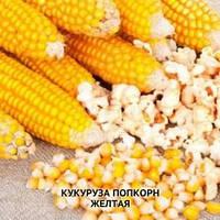 Семена кукурузы попкорн желтый 1 кг , Украина