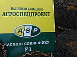 Семена подсолнечника ЛЕЙИЛА, Цена на урожайный гибрид ЛЕЙИЛА устойчивый к заразихе шести рас А-F., фото 4
