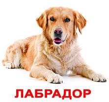 """Карточки Домана """"Породы собак"""" Рус."""