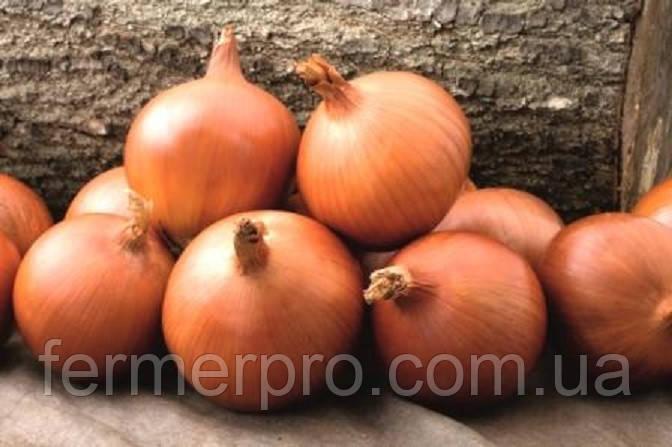 Семена лука Констанза F1 \ Konstanza F1 0.5 кг Griffaton