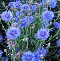 Василек синий (волошки)-лекарственная трава (20гр)