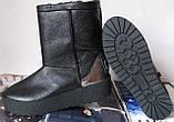 Marco зимние женские теплые угги! сапоги ботинки уги взуття Ugg кожа , фото 4