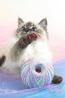 Антицарапки для котят-подростков и взрослых кошек