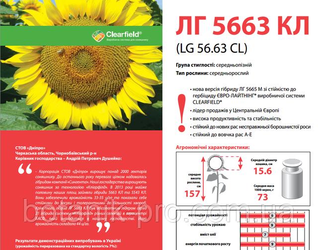 Семена подсолнечника Limagrain ЛГ 5663 КЛ под Евролайтинг