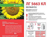 Семена подсолнечника Limagrain ЛГ 5663 КЛ под Евролайтинг урожай 2014 года.