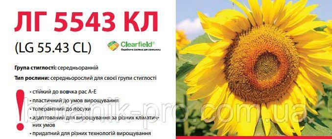 Семена подсолнечника Limagrain ЛГ 5543 КЛ Круизер под Евролайтинг
