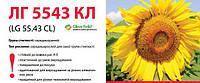 Семена подсолнечника Limagrain ЛГ 5543 КЛ Круизер под Евролайтинг урожай 2016 года.