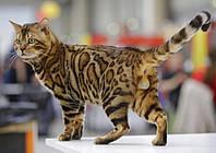 Выставка кошек в СК Локомотив