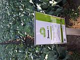 Семена капусты Зенон F1, 2500 семян, фото 5