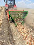 Семена лука Боско F1, 250 тыс.семян, фото 3