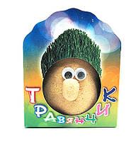 Травянчик-  Рост Травы