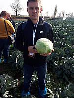 Семена капусты Сторидор F1, 2500 семян, фото 1