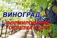 Как правильно обрезать виноград: советы новичкам, способы формирования кустов