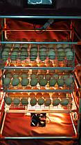 Автоматический инкубатор-конструктор на 180 яиц , фото 3