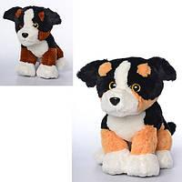 Мягкая игрушка MP 1379 (24шт) собачка, размер средний+, звук, 2цвета, на бат-ке, 25см