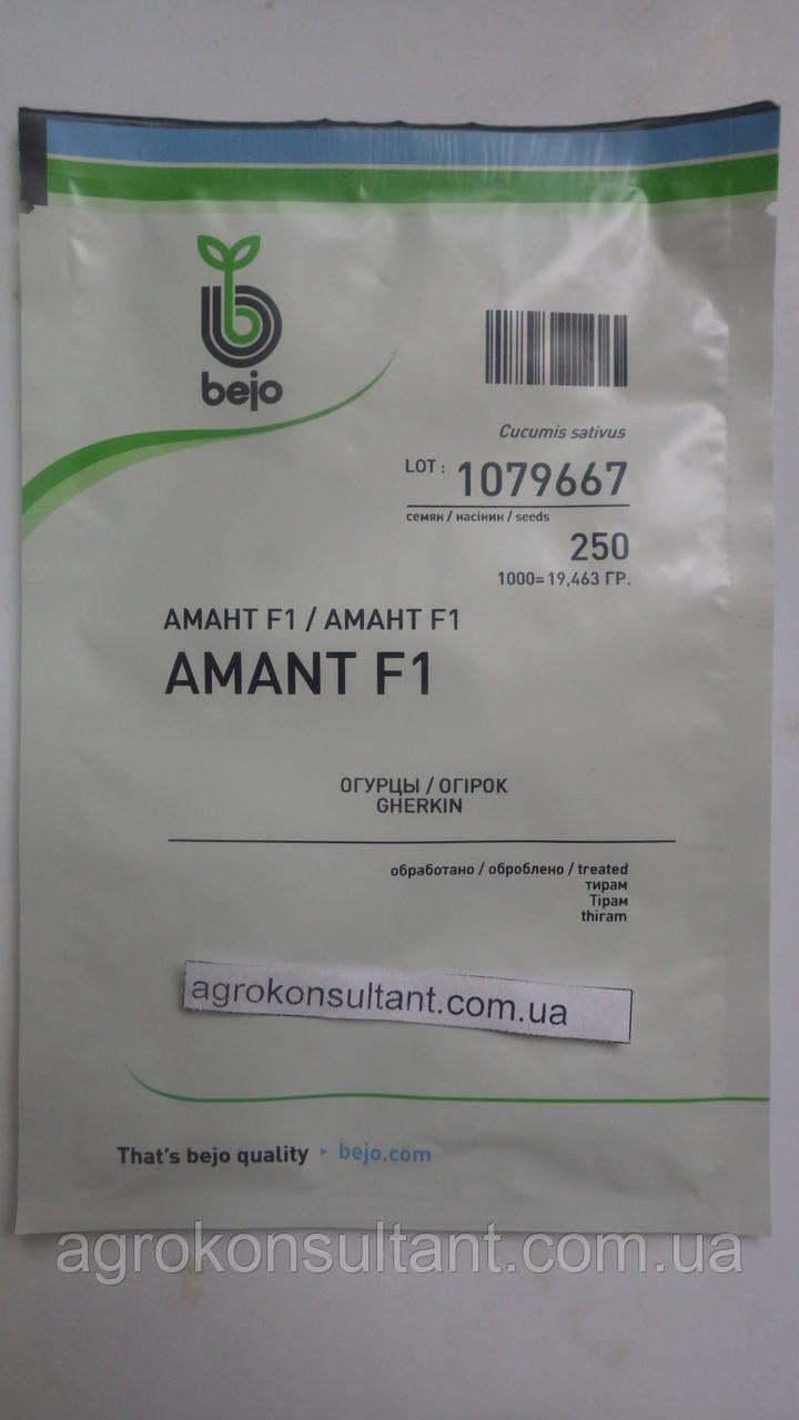 Семена огурца Амант F1 (Бейо / Bejo) 250 семян — партенокарпик, ультра-ранний гибрид (40-45 дней)