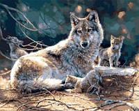"Картины по номерам ""Волчата"" [40х50см, С Коробкой]"