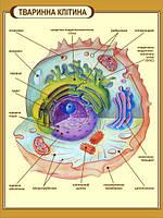 """Стенд """"Тваринна клітина"""" в кабінет БІОЛОГІЇ"""