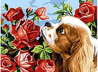 """Картины по номерам """"Кокер спаниэль и розы"""" [30х40см, С Коробкой]"""