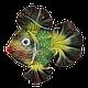 Рыбка «Попугай», фото 3