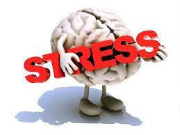 Нервная система и мозг