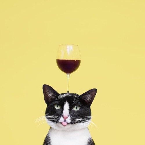 Винокот