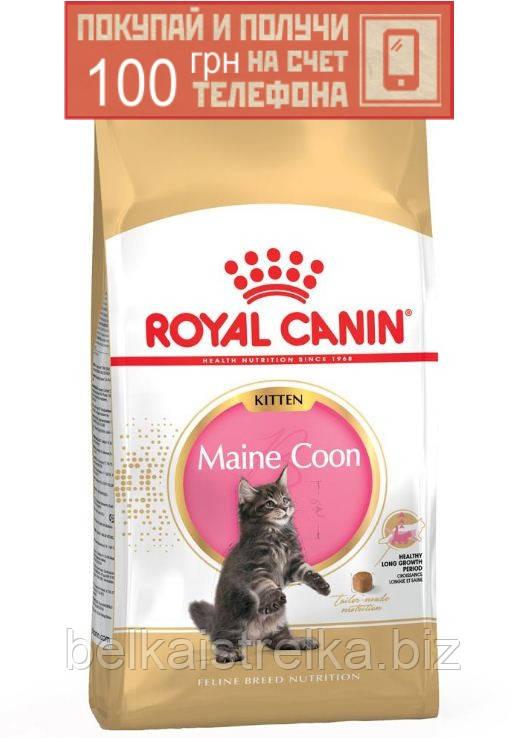 Корм для мейн-кунов Royal Canin Maine Coon Kitten, 4кг + ПОДАРОК 100 грн на мобильный