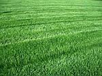 Уход за газоном в весенний период