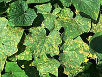 Недостаток микроэлементов в растениях