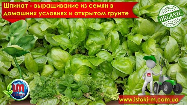 шпинат выращивание из семян