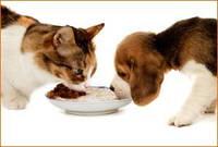 Корм для собак и котов