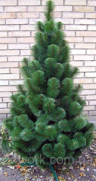 Сосна искусственная новогодняя зеленая 2.10 м.