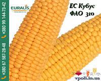 Кукуруза ЕС КУБУС (ФАО 310)