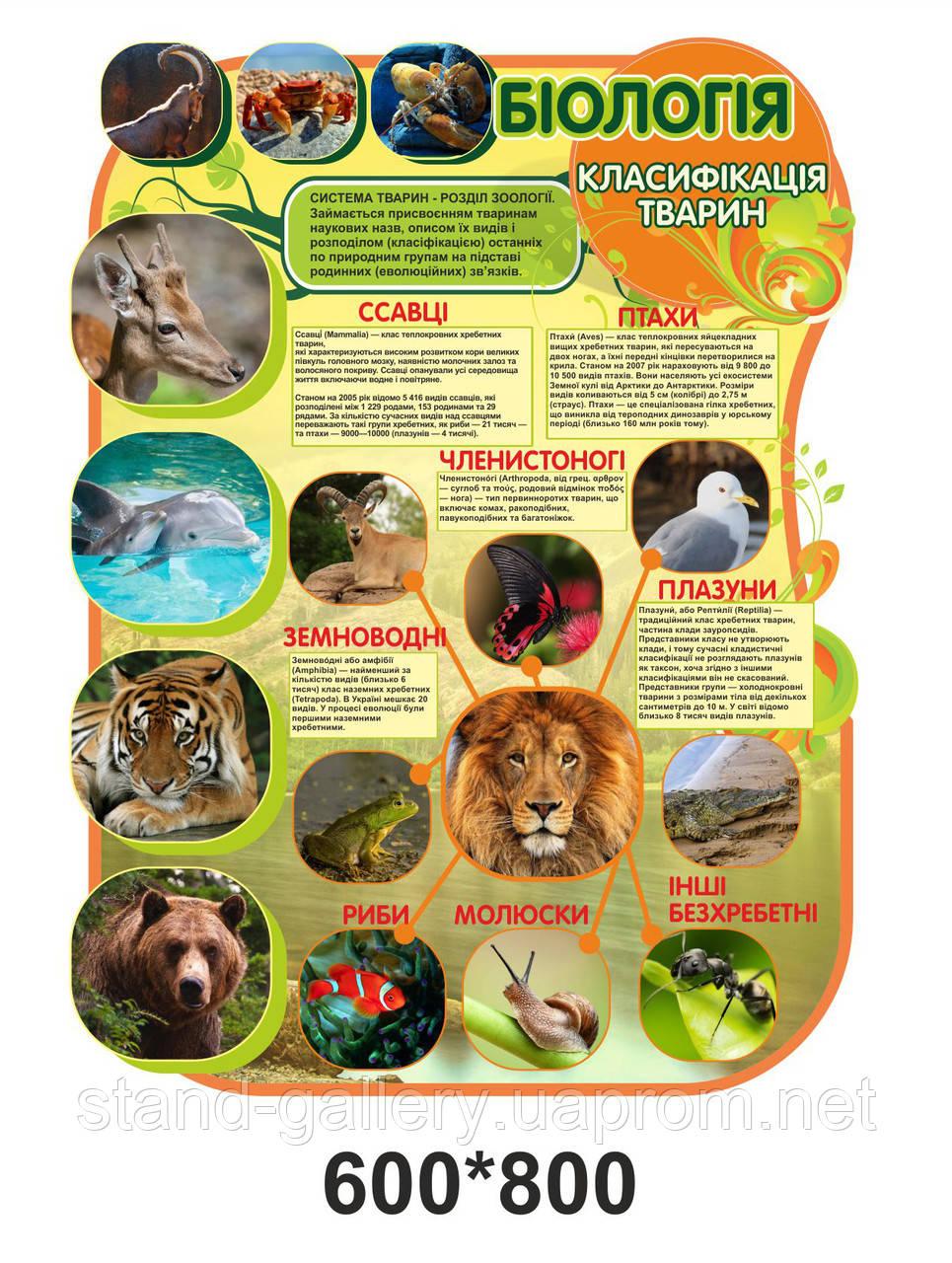 Оформлення кабінету біології: класифікація тварин