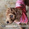 """Батник  """"Маленький хулиган"""" для собак Is Pet. Одежда для собак, фото 3"""