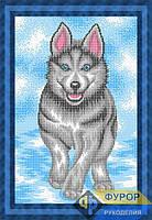 Схема для вышивки бисером - Собака Хаски, Арт. ЖБп3-105