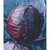 Семена капусты Ред Джевел F1 \ Red jewell F1 1000 семян Sakata