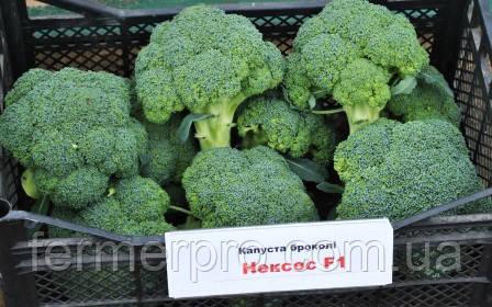 Семена капусты брокколи Нексос F1 \ Naxos F1 1000 семян Sakata