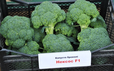 Семена капусты брокколи Нексос F1 \ Naxos F1 2500 семян Sakata