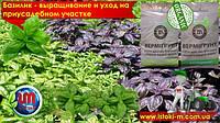 Базилик - выращивание и уход за пряным растением. Как выращивать базилик, на приусадебном участке в теплице и открытом грунте.