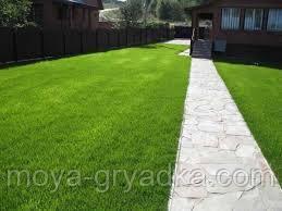 Газонна трава Декоративна