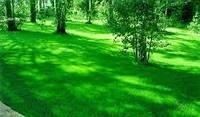 Газонна трава Спеціальна