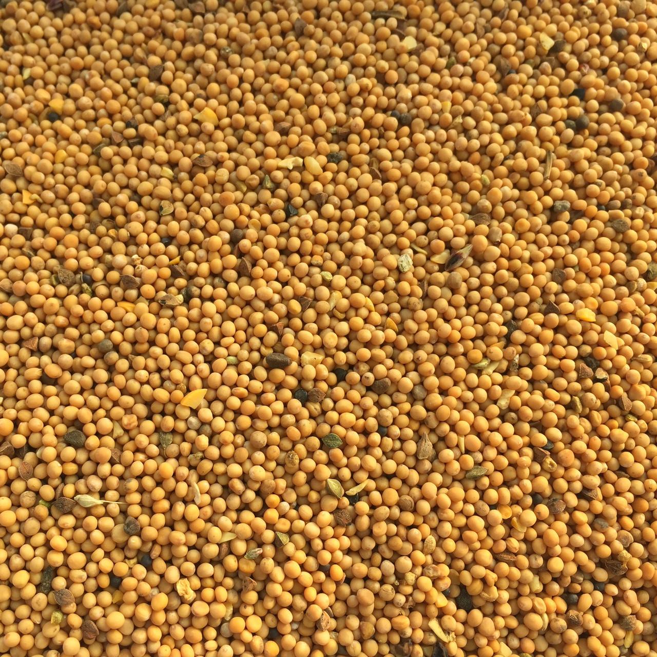 Семена горчицы микрозелень