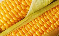 Семена кукурузы-PR38N86