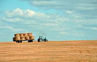 Клуб агроэффективности: как фермерскому хозяйству изучать сложные технологии и не обанкротиться