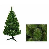Сосна зеленая 1,5м
