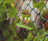 Идеальное ограждение для светолюбивых растений