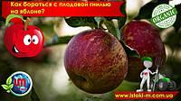 Как бороться с плодовой гнилью на яблоне?