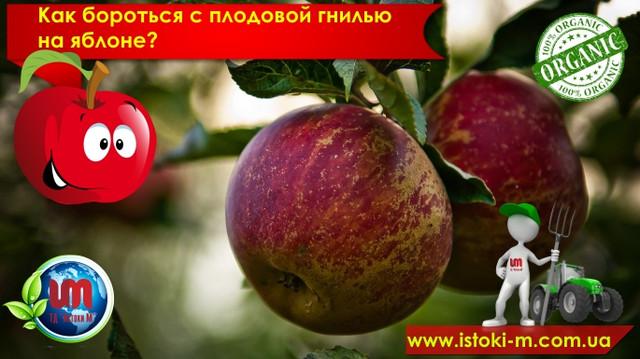плодовая гниль на яблоне что делать